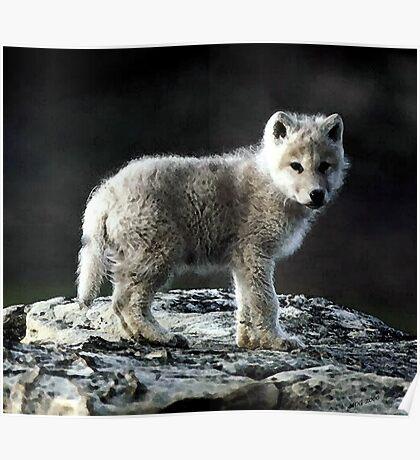 Arctic Wolf Portrait Poster