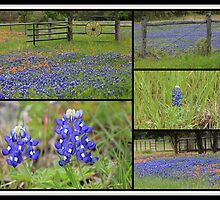 Texas Bluebonnet Collage by Betty Northcutt