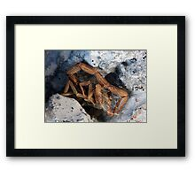 ©NS Scorpion Skin IA Framed Print