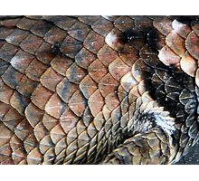 ©NS Reptile Pattern IIA Photographic Print