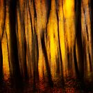 Autumn Forest Abstract by Chris Lord