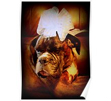 Boxer Dog With Blue Bow Poster