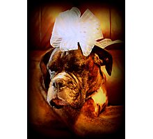 Boxer Dog With Blue Bow Photographic Print