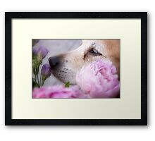 Smell the flowers Framed Print