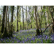 Adcombe Bluebell Wood, Somerset Photographic Print