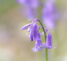 Bluebell Days by Heidi Stewart