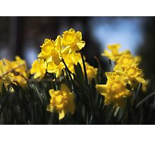 Sunny Spring Day Photographic Print