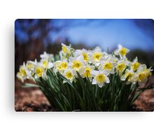Bunch of Spring Color Canvas Print