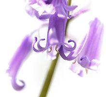 Jazzy Bluebells by Heidi Stewart