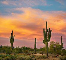 Saguaro Desert Life by Bo Insogna