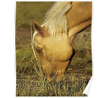 Yellowstone Steed Poster