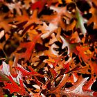 Autumn Leaves by Craig Higson-Smith