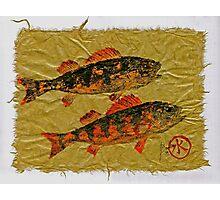 Gyotaku - Yellow Perch - Orange Roughy Photographic Print