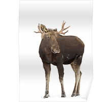 Moose in winter Poster