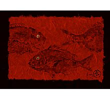 Gyotaku Scup Series 3  Red Unryu Paper Photographic Print