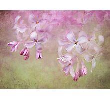 Dangle Me Lilac Photographic Print