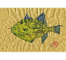 Gyotaku - Triggerfish - Queen Triggerfish Photographic Print