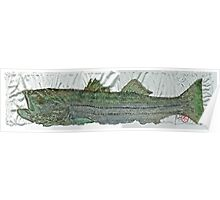 Gyotaku - Striped Bass - Rock Fish - Striper Poster