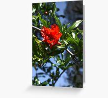 PomPom Pomegranate Flowers Greeting Card