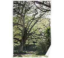 Tree of Serenity Poster