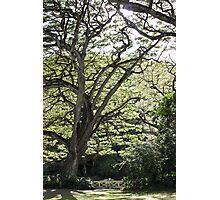 Tree of Serenity Photographic Print