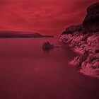 Infra Red Seaweed 2 by rennaisance