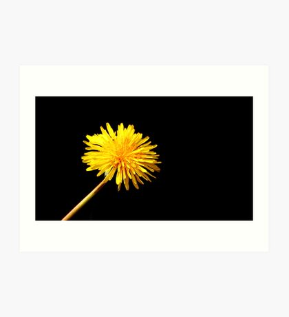 Solitary Daffodil Art Print
