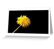 Solitary Daffodil Greeting Card