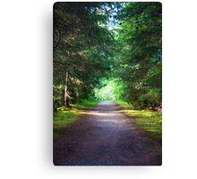 An Alaskan Forest  Canvas Print