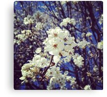 Spring InstaFlower Canvas Print