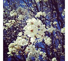 Spring InstaFlower Photographic Print