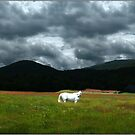 White Horse Framed by a Glorious Dream by Wayne King