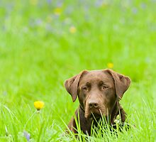 My name is Coco by Chris Tarling