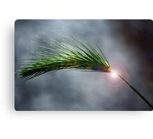 Spike in the Dark Canvas Print