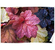 Wet Heuchera (Coral Bells) Leaves Poster