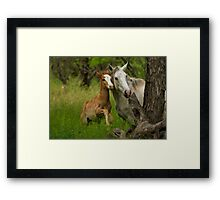 Born Wild  Framed Print