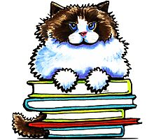 Smart Kitty | Ragdoll/Ragamuffin by offleashart