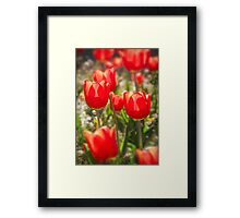 Red Tulips In The Sun Framed Print