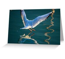 seagull flying on lake Greeting Card
