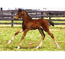 Warmblood Foal Horse Photographic Print