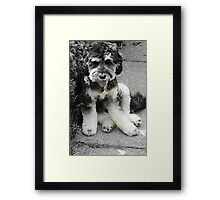 Archie Boy! Framed Print