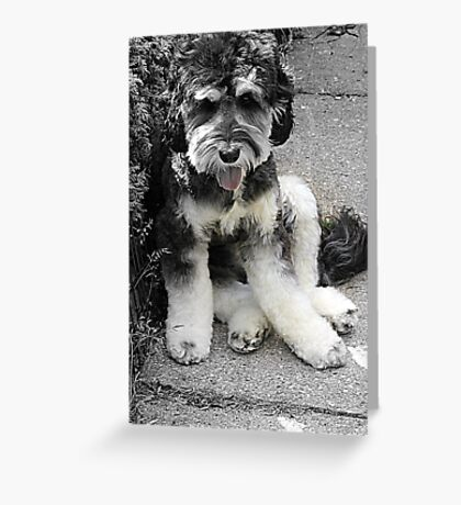 Archie Boy! Greeting Card