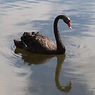 Black Swan by Pauline Tims