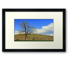 Spring at Trapp Branch Framed Print