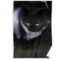 Suki's New Silver Coat Poster
