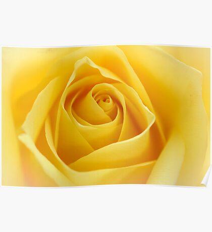 Macro Rose Bloom Flower Poster