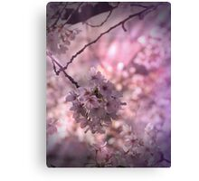 Cherry blossoms in pink Canvas Print