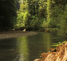 Flowing Through the Redwoods by Barbara  Brown