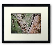 Vegetable Patch - a study - VII Framed Print