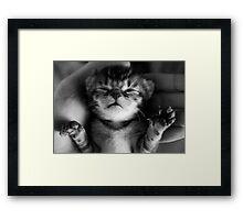 Precious Kitten Framed Print